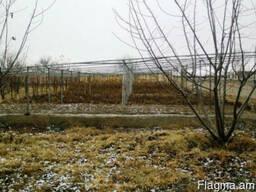 Ферма в с. Ноиакерт - фото 2