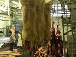 Мясо (Туша, полутуша охлажденная, замороженная) свинина, гов