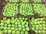 Польское яблоко от производителя La-Sad - photo 6