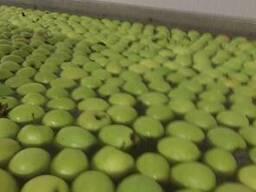 Яблоки из Польши! - photo 2
