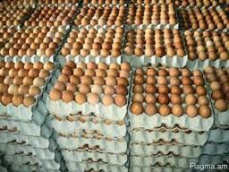 Яйцо свежее халяль С0, С1