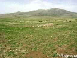 Земельный участок в с. Аралер - фото 3