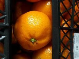 Цитрусовые,фрукты и овощи