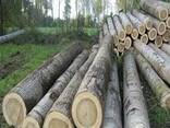Лес кругляк, Фанкряж - photo 2