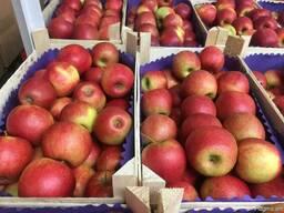 Польское яблоко от производителя La-Sad - photo 2