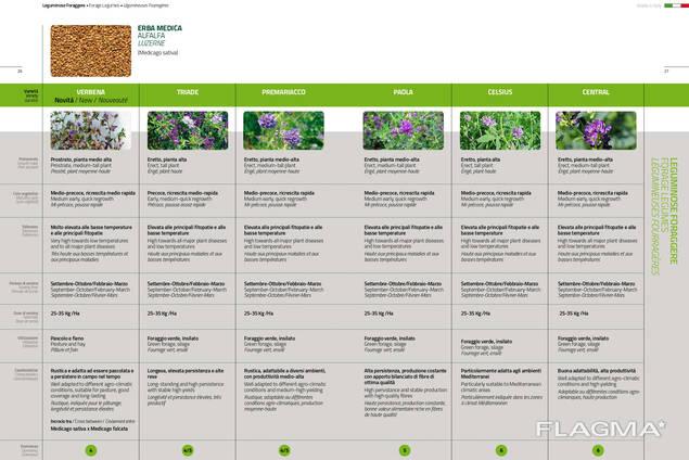 Семена Люцерны (Medicago sativa)