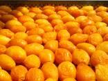 Сухофрукты , абрикос, чернослив, персик, груша - фото 5