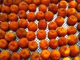 Сухофрукты , абрикос, чернослив, персик, груша - фото 8