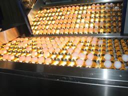 Яйца и соль - фото 8