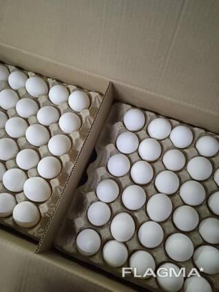 Яйцо куриное, С1, С2