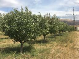 Земля для производства рядом с Ереваном