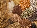 Зерно и зерновые - фото 1