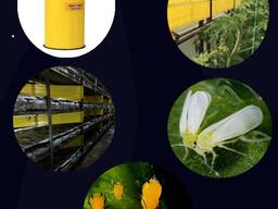 Желтые рулонные ловушки 15смх100м - photo 1